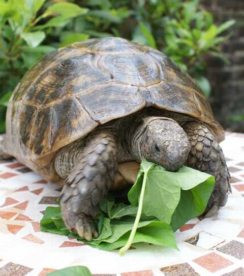 What is slow food? What this turtle is doing